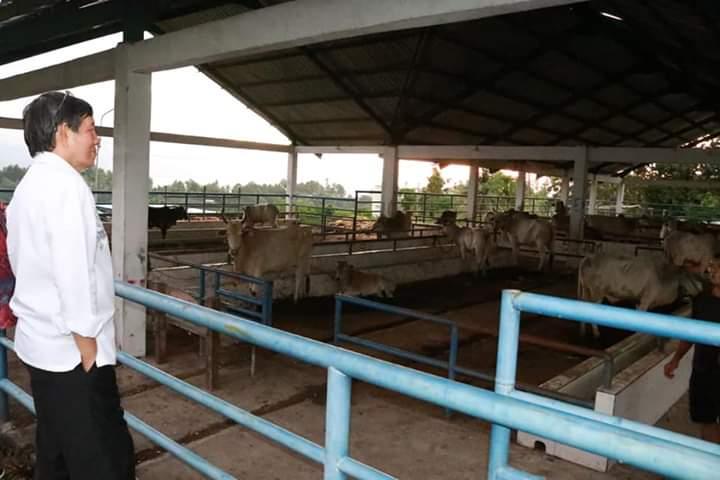 Tinjau RPH Sapi di Loreng Bailang. Wali Kota Vicky Lumentut Minta Tingkatkan Pemanfaatan