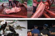 Seminggu Ops Pekat di Minsel, Jaring Kasus Sajam, Mabuk, Knalpot Bising dan Sabung Ayam